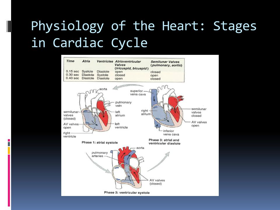 Physiology of the Heart: Stages in Cardiac Cycle