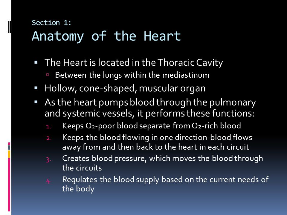Section 1: Anatomy of the Heart
