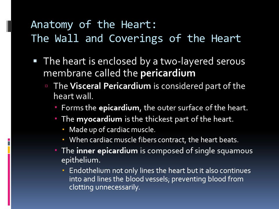 Anatomy of the Heart: The Wall and Coverings of the Heart