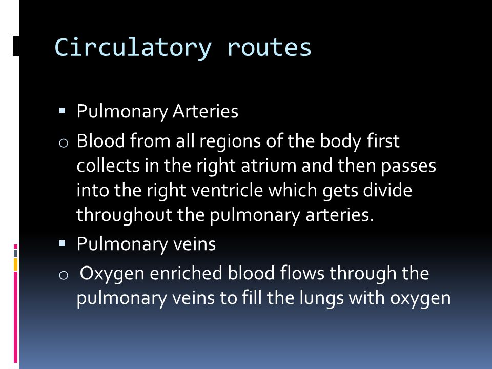Circulatory routes Pulmonary Arteries