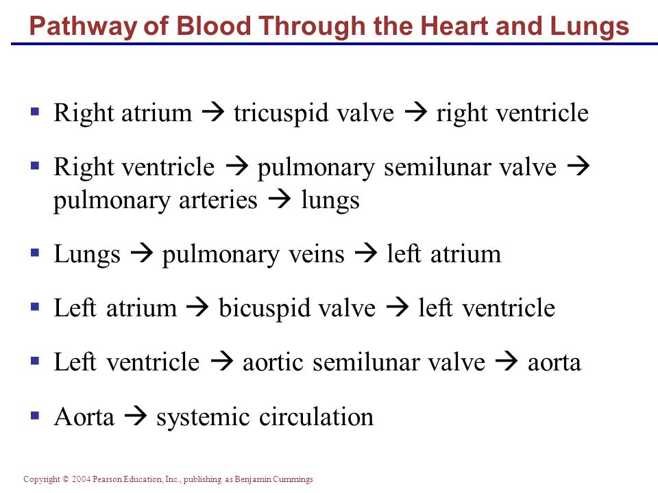 Pathway of Blood Through the Heart and Lungs