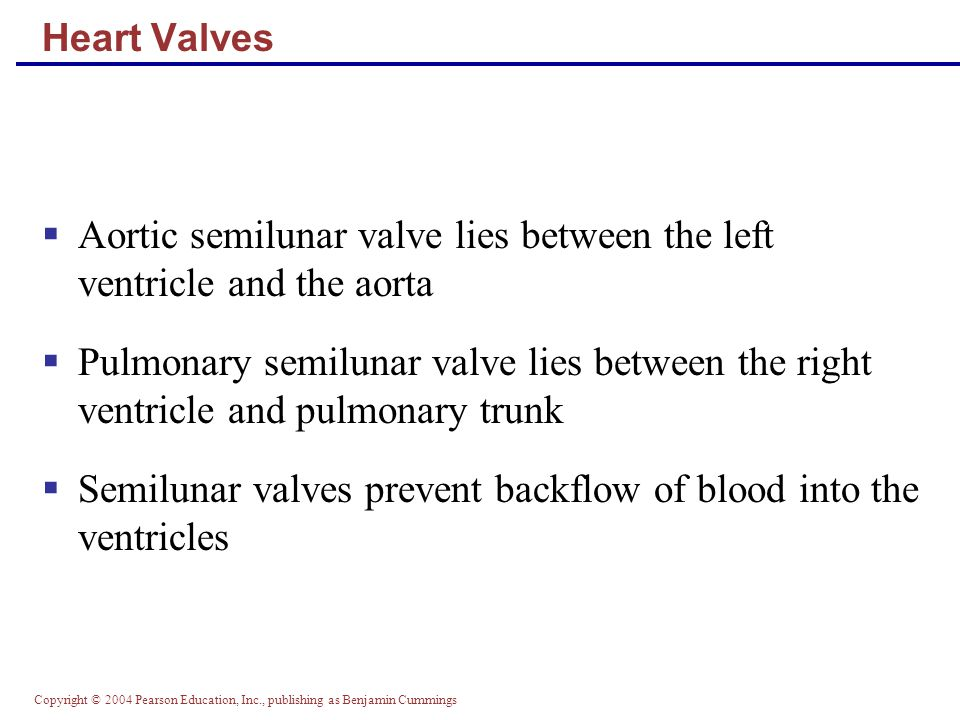 Aortic semilunar valve lies between the left ventricle and the aorta