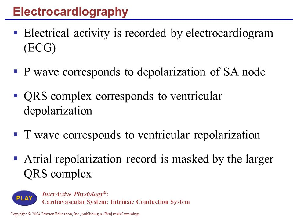 Electrical activity is recorded by electrocardiogram (ECG)
