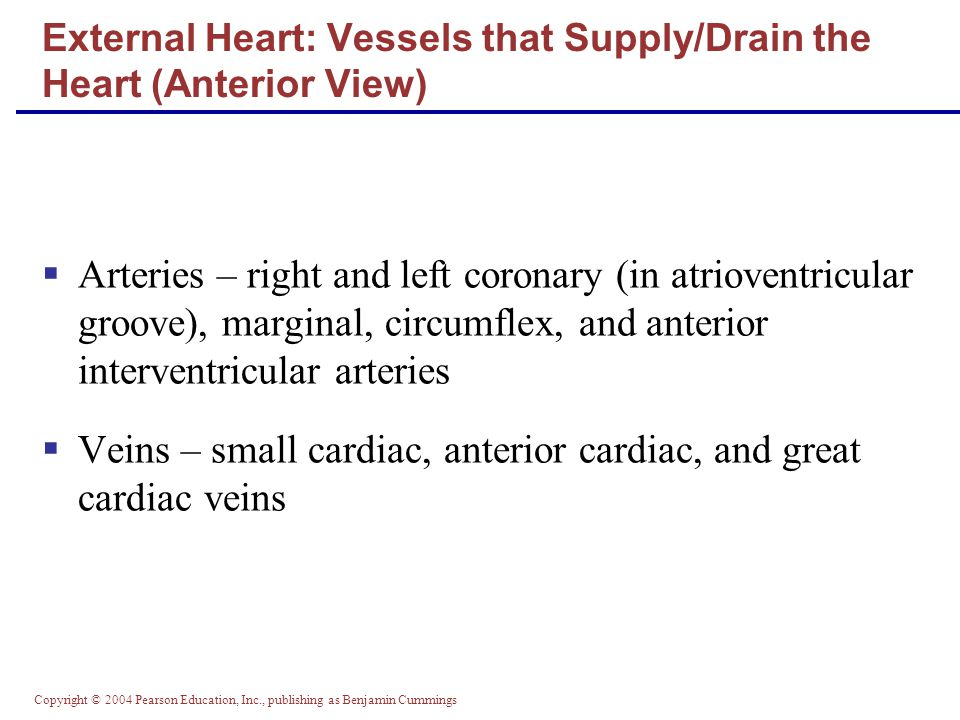 External Heart: Vessels that Supply/Drain the Heart (Anterior View)
