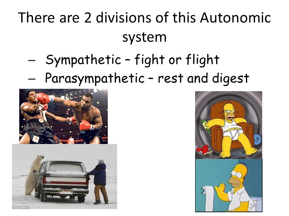 There are 2 divisions of this Autonomic system