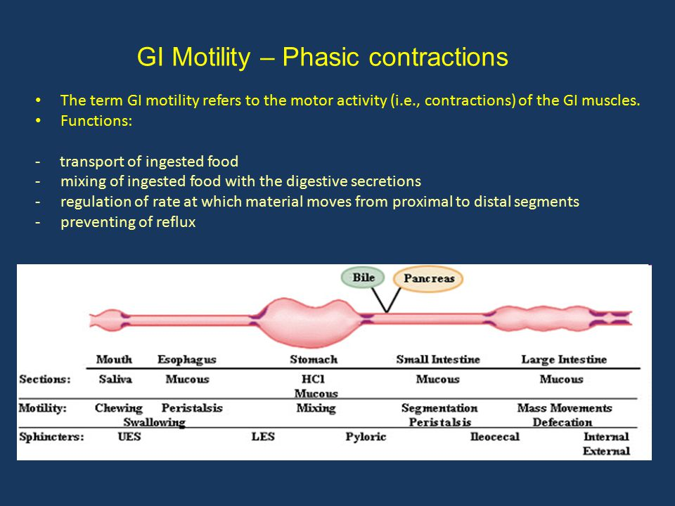 GI Motility – Phasic contractions