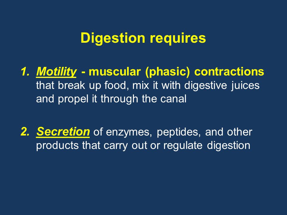 Digestion requires Motility - muscular (phasic) contractions that break up food, mix it with digestive juices and propel it through the canal.