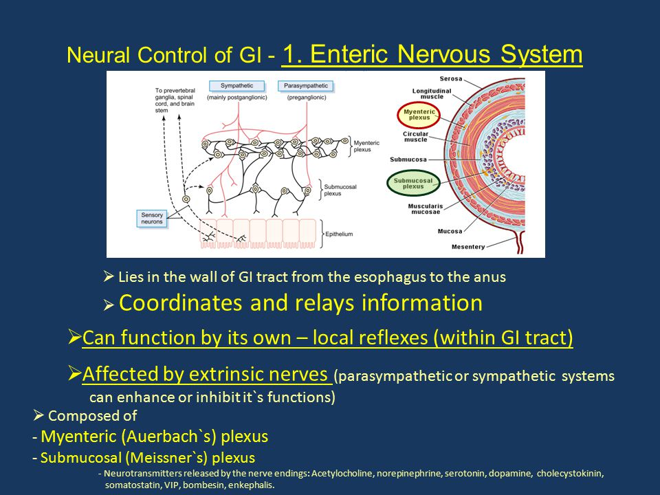 Neural Control of GI - 1. Enteric Nervous System