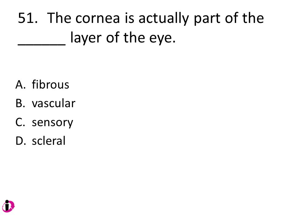 51. The cornea is actually part of the ______ layer of the eye.