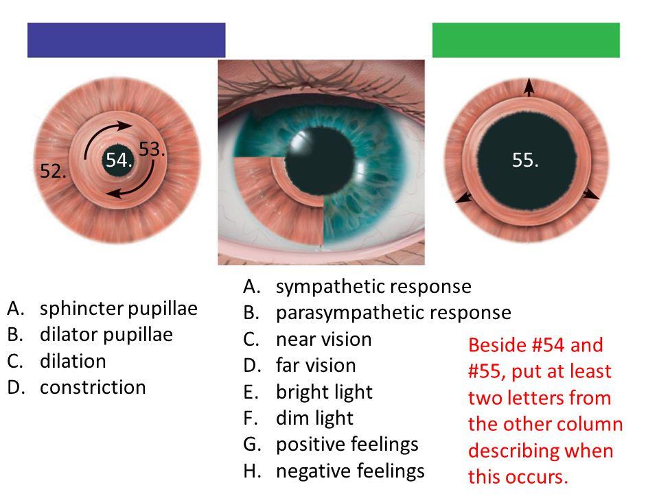 53. 54. 55. 52. sympathetic response. parasympathetic response. near vision. far vision. bright light.