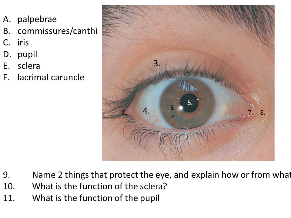 9. Name 2 things that protect the eye, and explain how or from what.