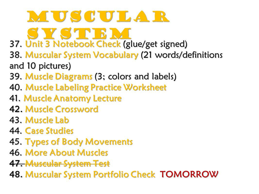Muscular System 37. Unit 3 Notebook Check (glue/get signed)