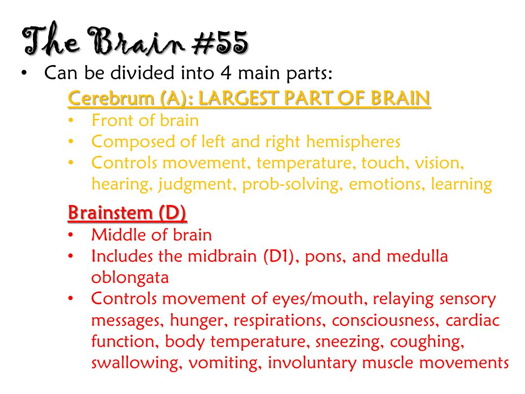 The Brain #55 Can be divided into 4 main parts: