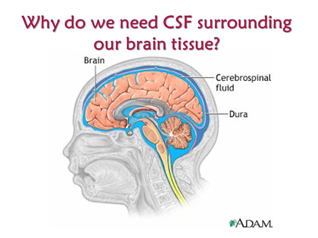 Why do we need CSF surrounding our brain tissue