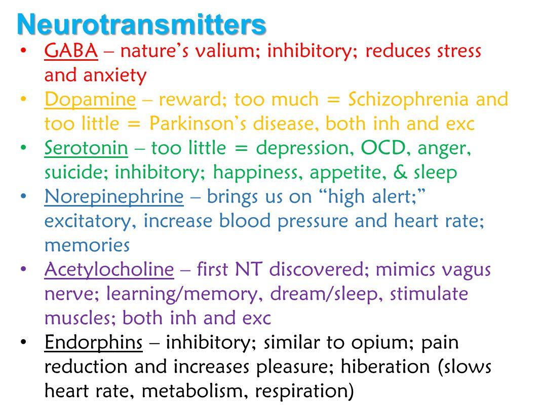 Neurotransmitters GABA – nature's valium; inhibitory; reduces stress and anxiety.