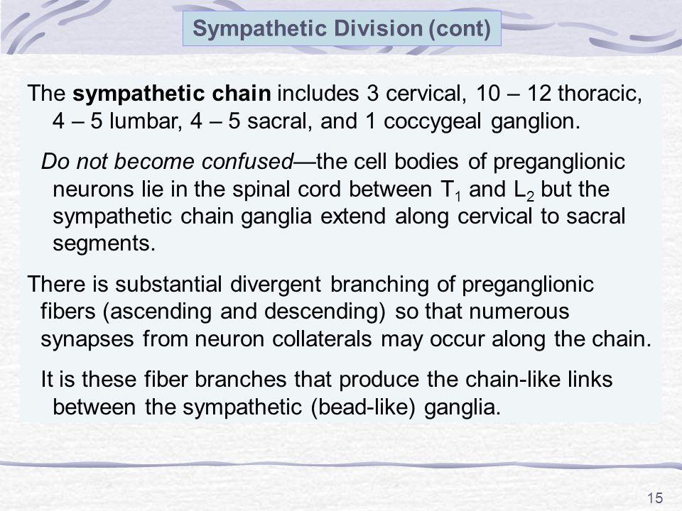 Sympathetic Division (cont)