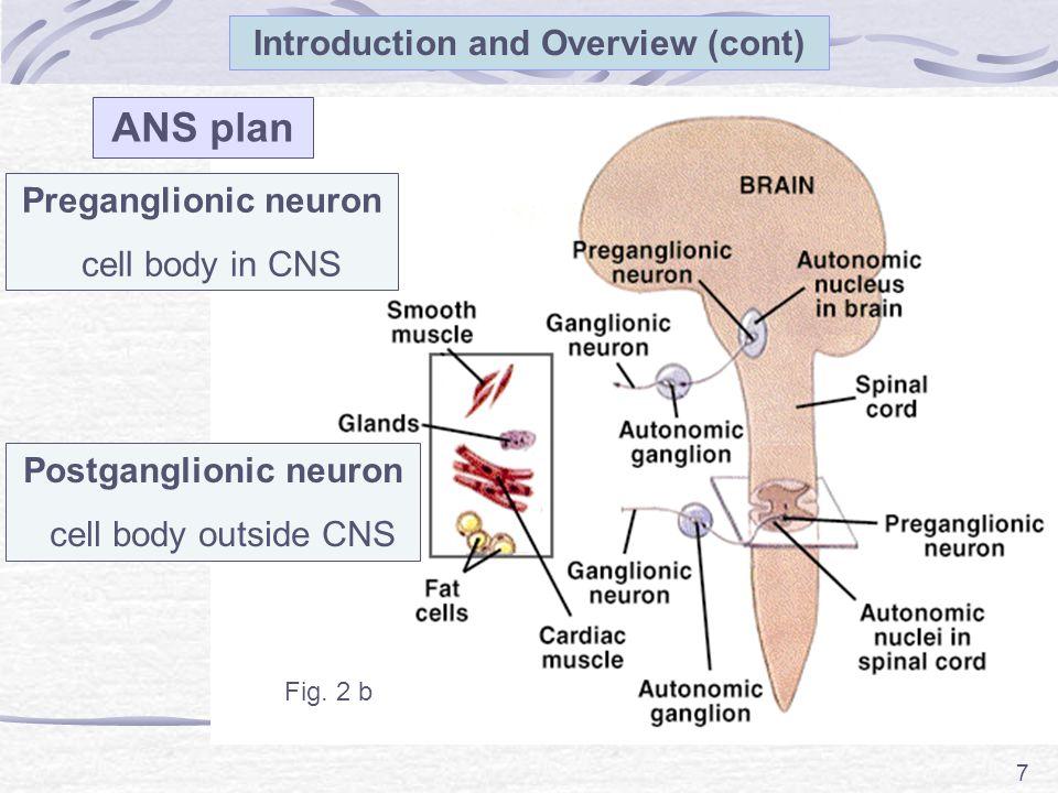 Postganglionic neuron