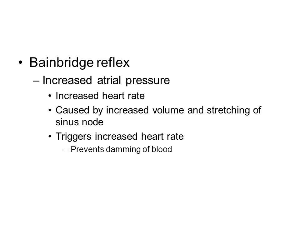 Bainbridge reflex Increased atrial pressure Increased heart rate