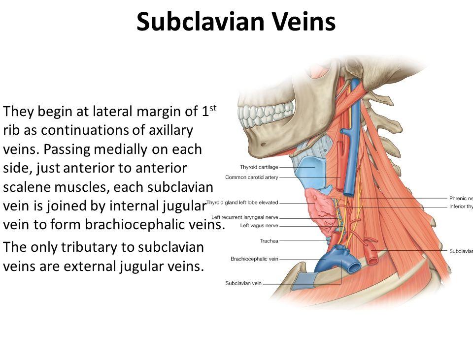 Subclavian Veins
