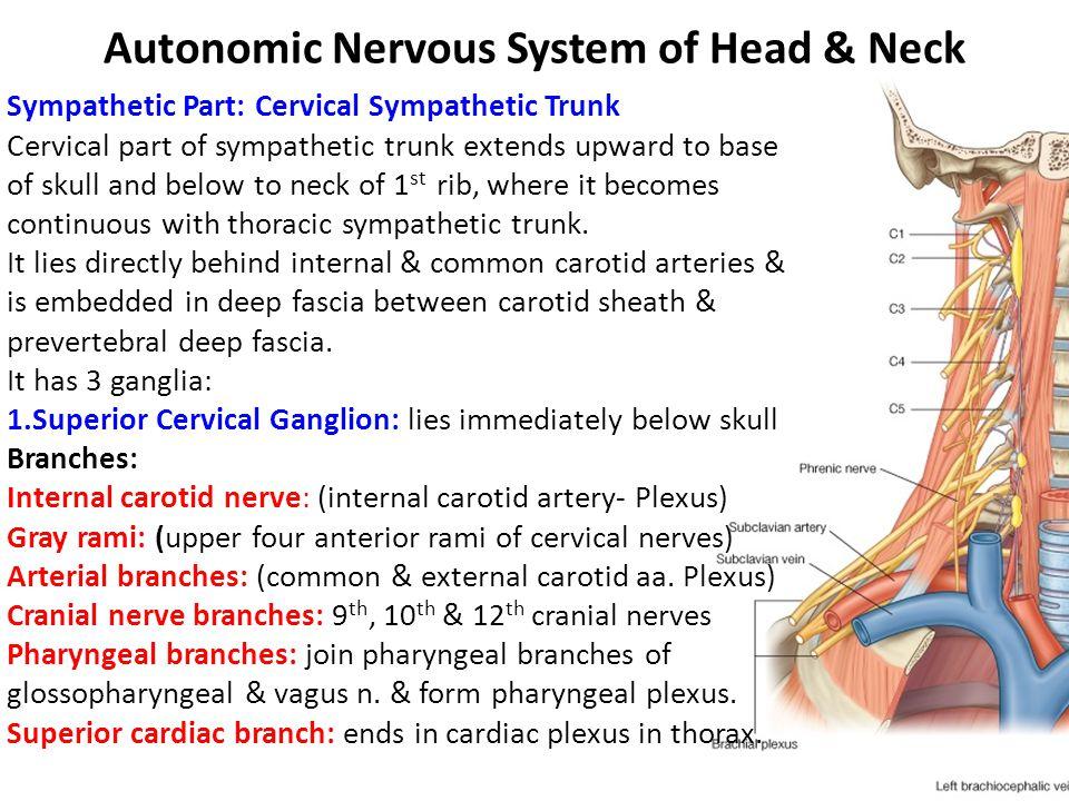 Autonomic Nervous System of Head & Neck