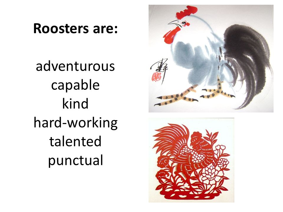 Roosters are: adventurous capable kind hard-working talented punctual