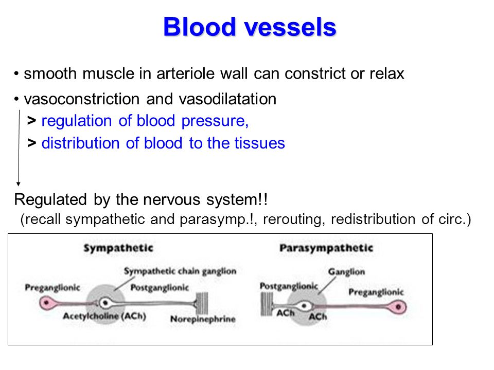 Blood vessels smooth muscle in arteriole wall can constrict or relax