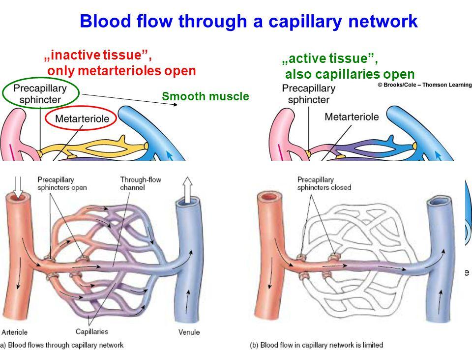 Blood flow through a capillary network