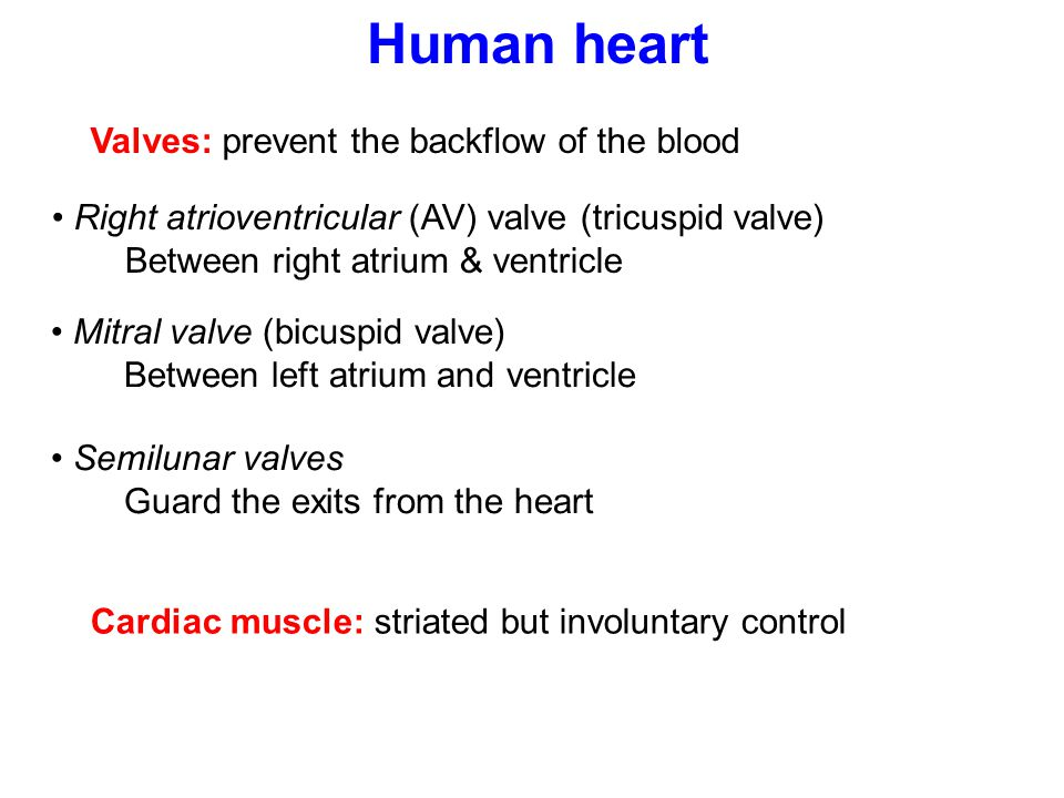 Human heart Valves: prevent the backflow of the blood