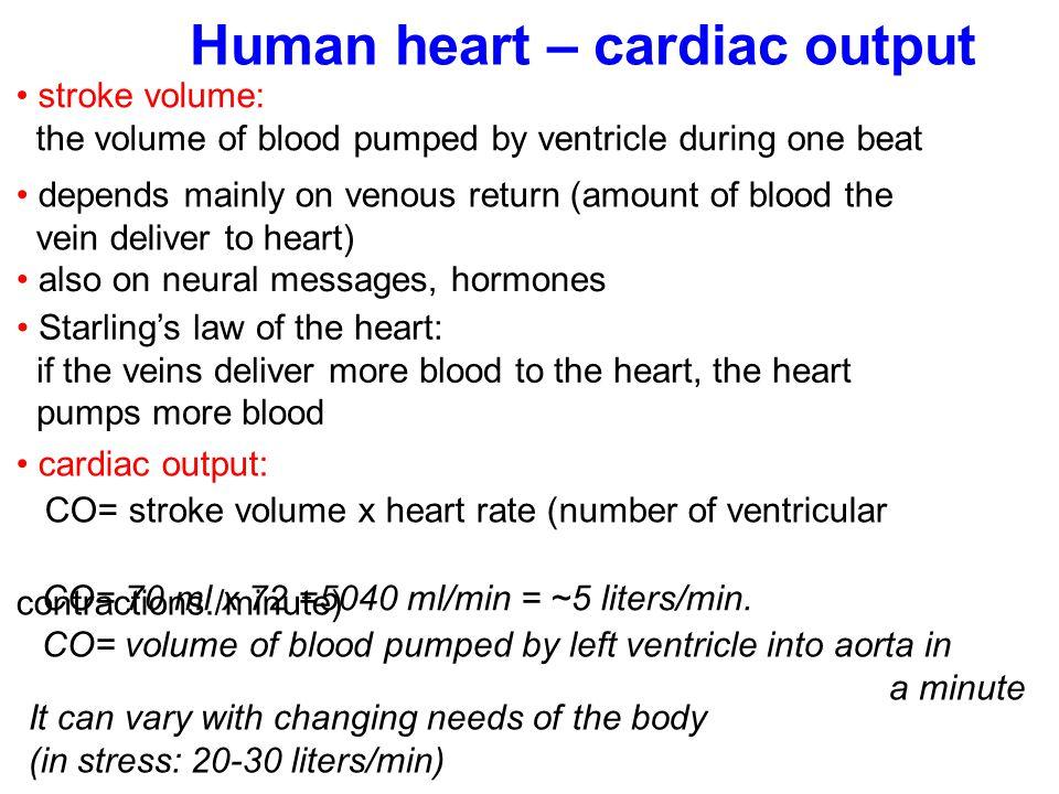Human heart – cardiac output
