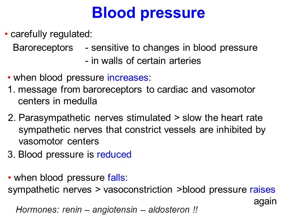 Blood pressure carefully regulated:
