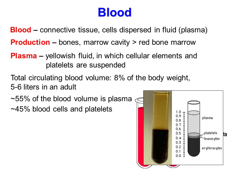 Blood Blood – connective tissue, cells dispersed in fluid (plasma)