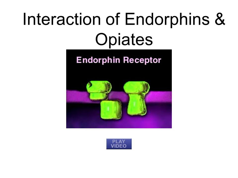 Interaction of Endorphins & Opiates