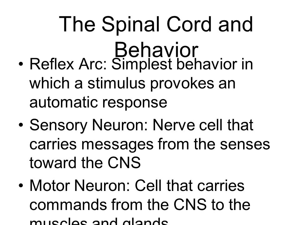 The Spinal Cord and Behavior