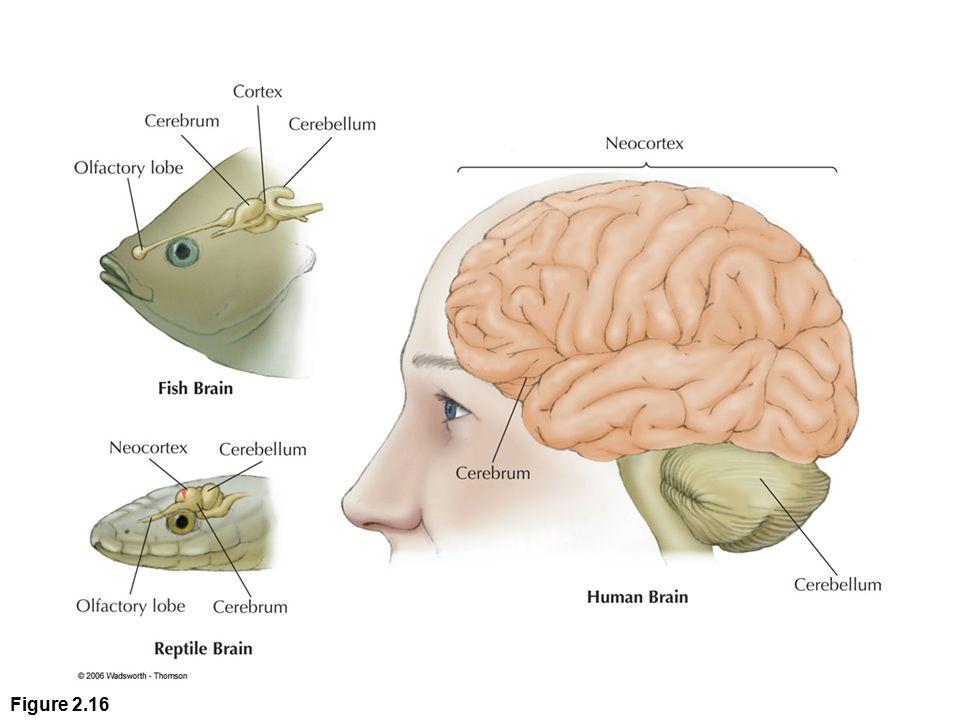 Figure 2.16 Figure 2.16
