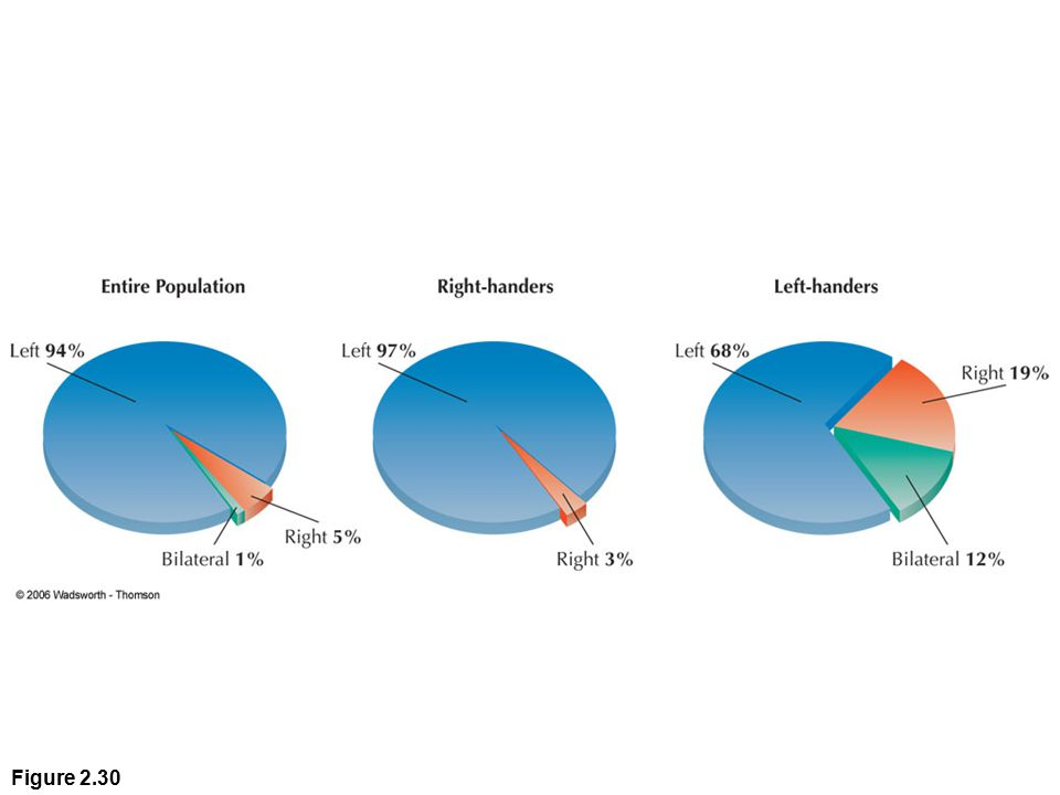 Figure 2.30 Language is controlled by the left side of the brain in the majority of right- and left-handers.