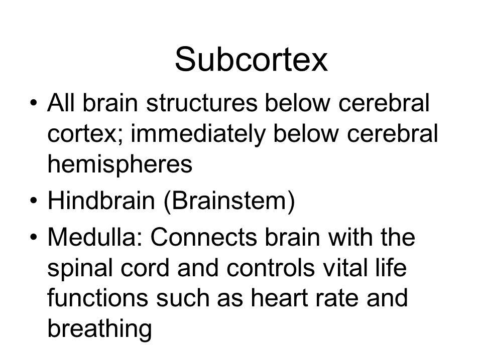 Subcortex All brain structures below cerebral cortex; immediately below cerebral hemispheres. Hindbrain (Brainstem)