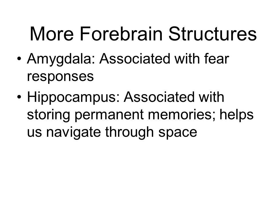 More Forebrain Structures