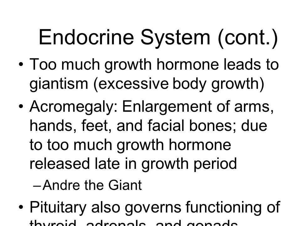 Endocrine System (cont.)