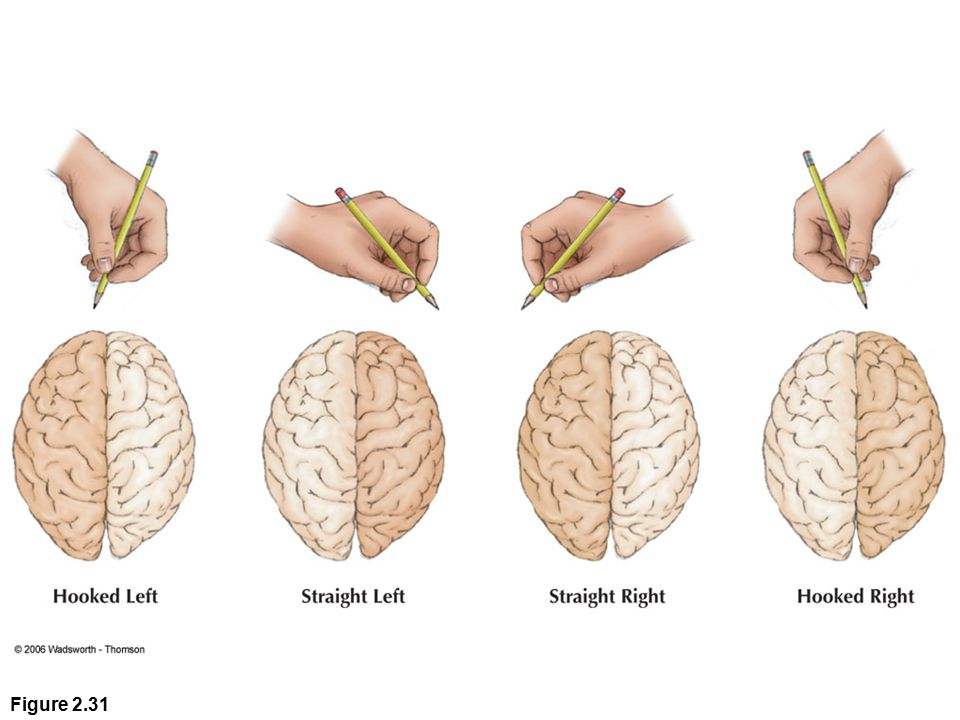 Figure 2.31 Research suggests that the hand position used in writing may indicate which brain hemisphere is used for language. (Redrawn from an illustration by M. E. Challinor.)