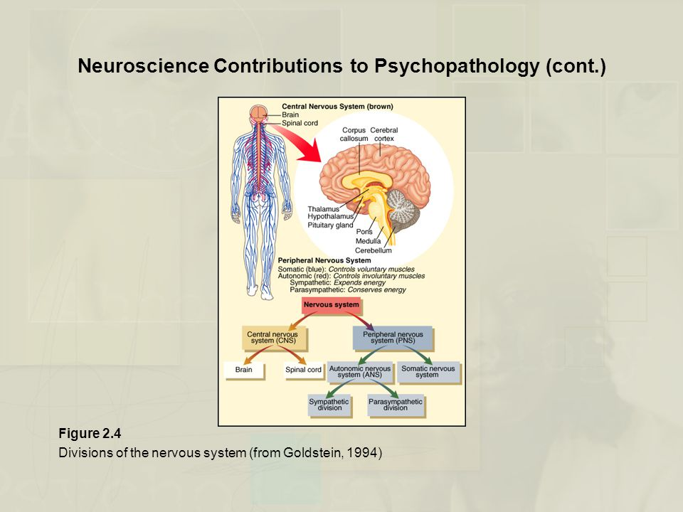 Neuroscience Contributions to Psychopathology (cont.)