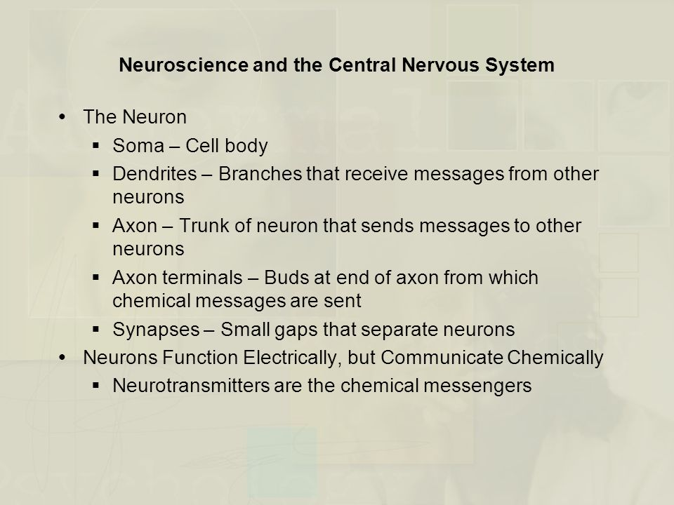 Neuroscience and the Central Nervous System