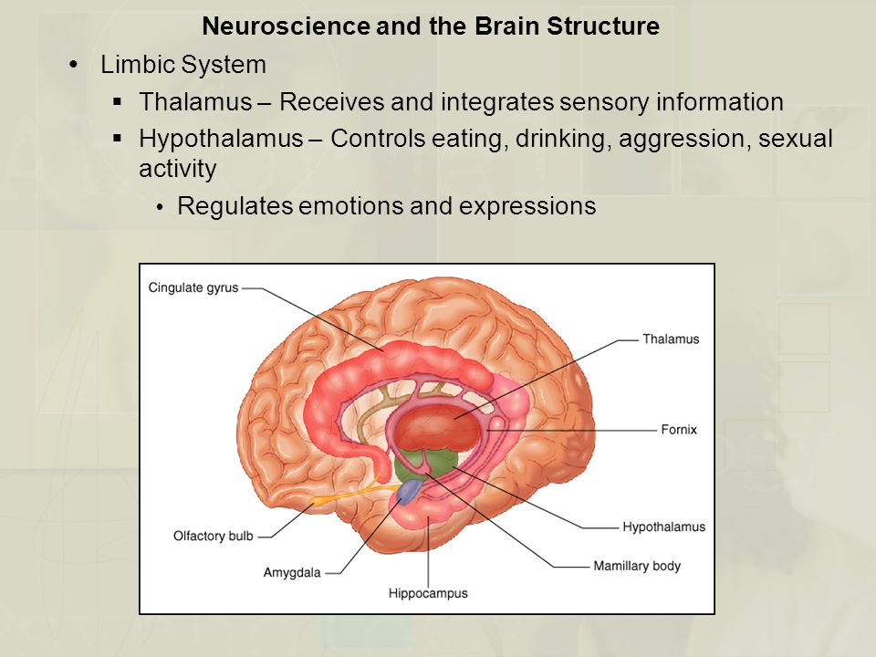 Neuroscience and the Brain Structure