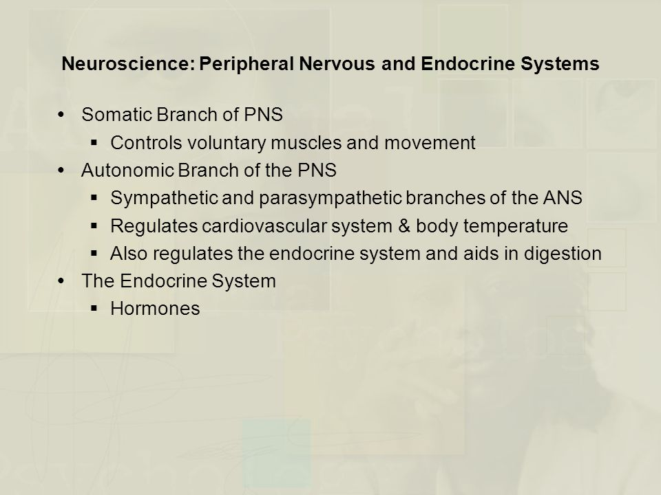 Neuroscience: Peripheral Nervous and Endocrine Systems
