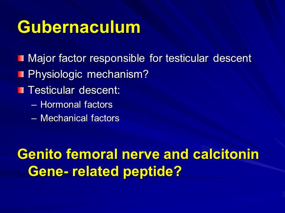 Gubernaculum Major factor responsible for testicular descent. Physiologic mechanism Testicular descent: