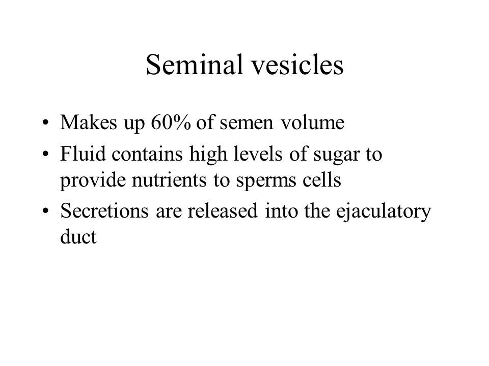 Seminal vesicles Makes up 60% of semen volume