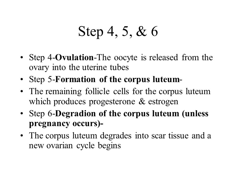 Step 4, 5, & 6 Step 4-Ovulation-The oocyte is released from the ovary into the uterine tubes. Step 5-Formation of the corpus luteum-