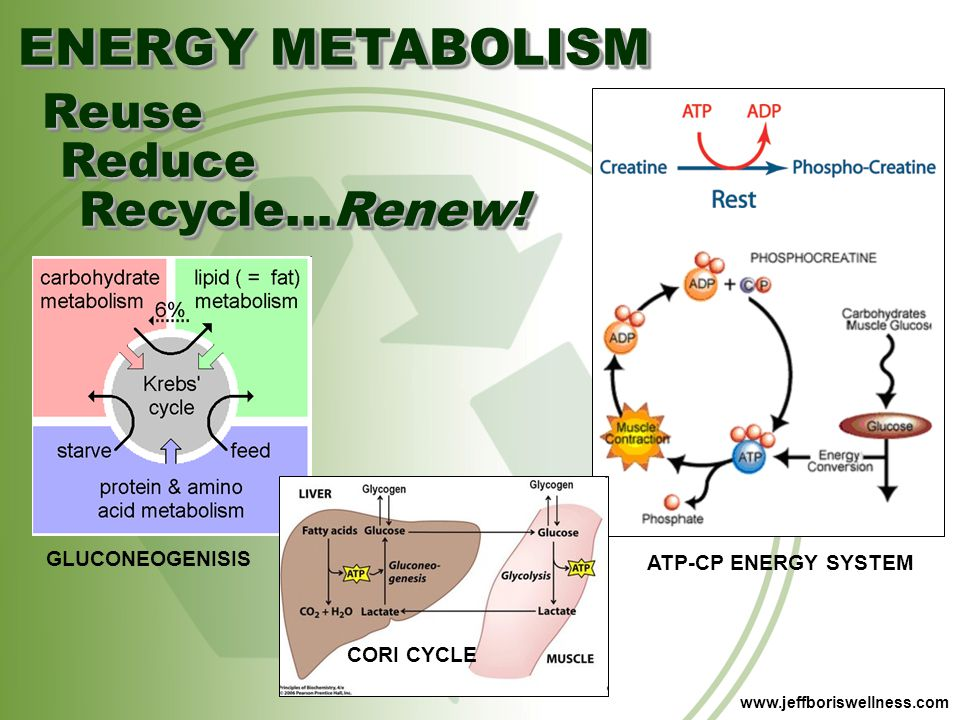 ENERGY METABOLISM Reuse Reduce Recycle…Renew! GLUCONEOGENISIS