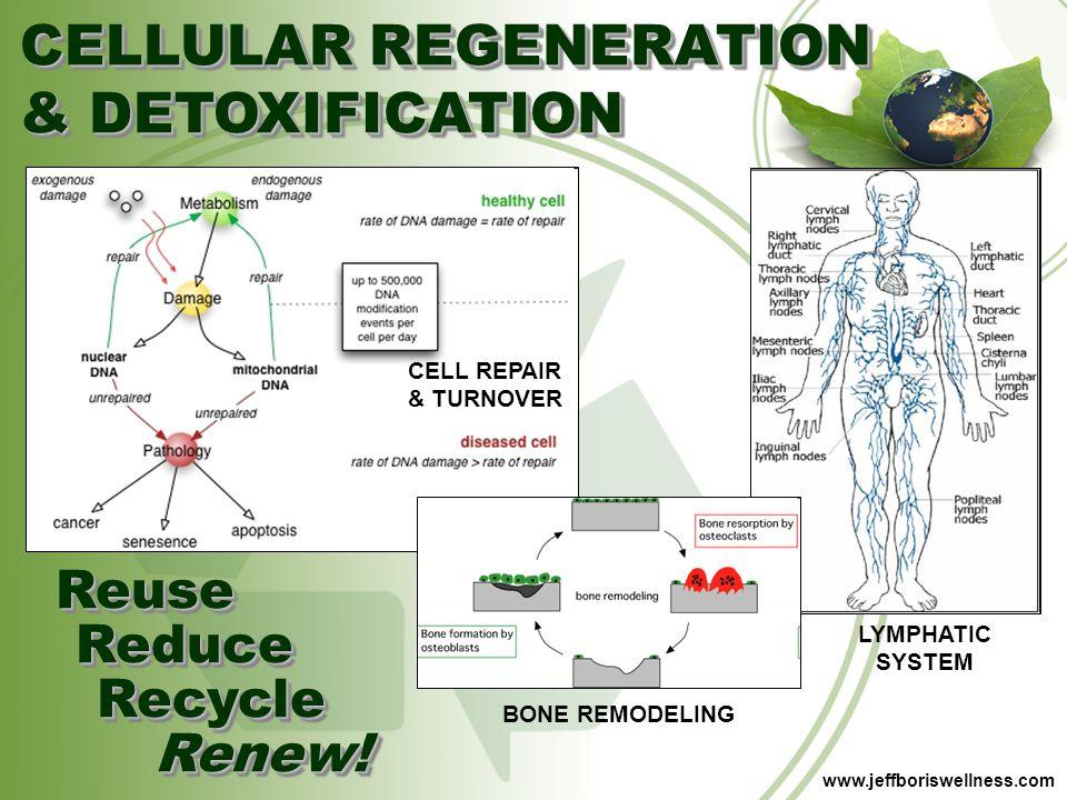 CELLULAR REGENERATION & DETOXIFICATION
