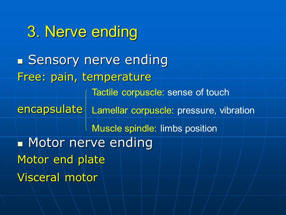 3. Nerve ending Sensory nerve ending Motor nerve ending