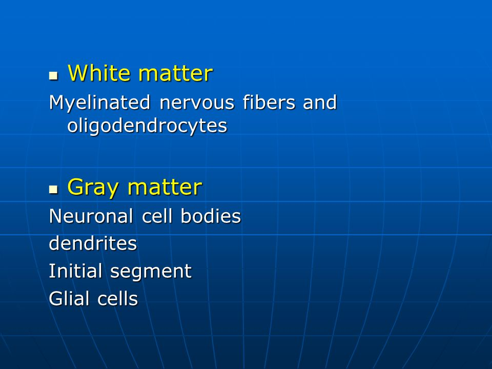 White matter Gray matter